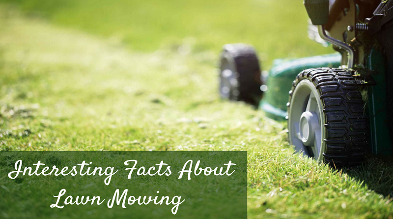 All You Know About Lawn Mowers