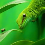 live foods for reptiles