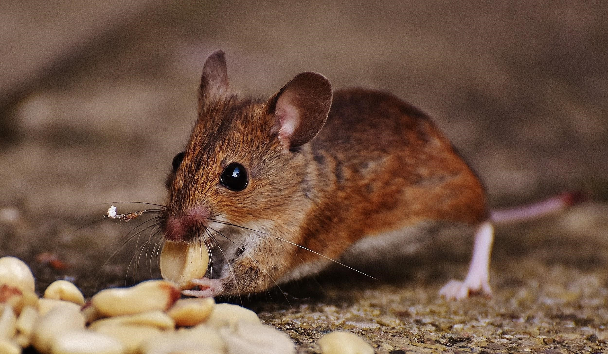 5 Ways to Prevent Pest Infestation In Your Home